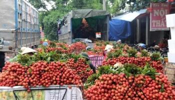 Bác tin đồn vải thiều Bắc Giang bị ép giá còn 2.000 đồng/kg