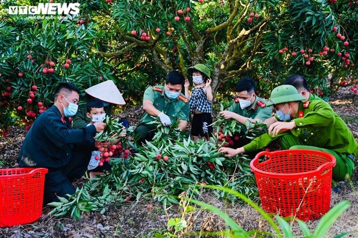 Công an Bắc Giang xắn tay giúp nông dân thu hoạch vải trong mùa COVID-19 - 3