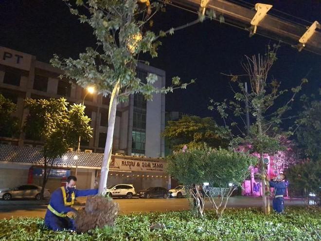 Bắt đầu đánh chuyển, thay thế cây phong trên đường Nguyễn Chí Thanh và Trần Duy Hưng ảnh 2