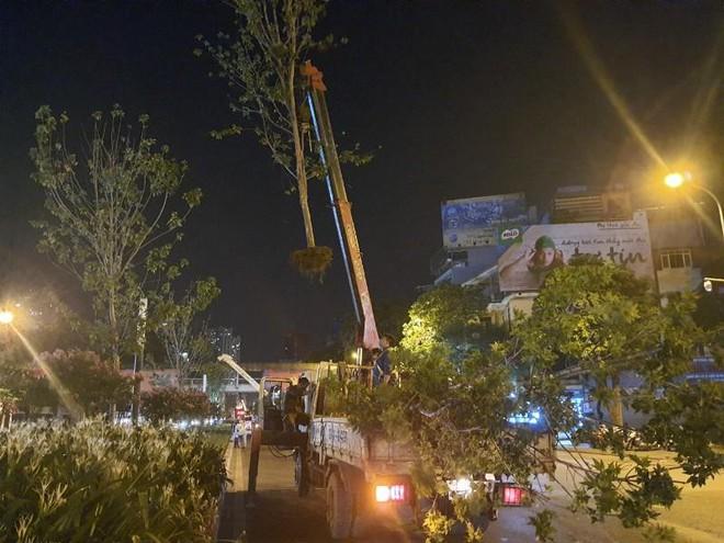 Bắt đầu đánh chuyển, thay thế cây phong trên đường Nguyễn Chí Thanh và Trần Duy Hưng ảnh 4