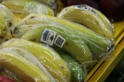 Bầu Đức chi nghìn tỷ mở rộng diện tích trồng chuối
