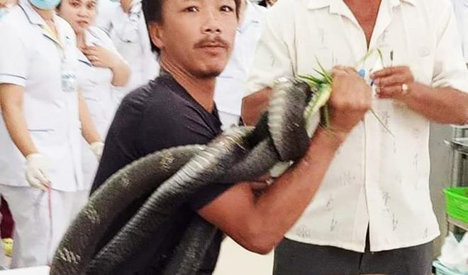 Chuyển người đàn ông bị rắn hổ mang chúa cắn đến Bệnh viện Chợ Rẫy cấp cứu