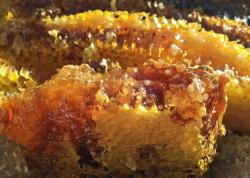 Mật ong điên - độc dược từ dãy Himalaya