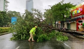 Bão số 5 áp sát: Lốc xoáy quật đổ cây ở Huế, Đà Nẵng mưa lớn kèm sấm chớp