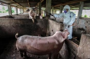 Phát hiện chủng virus corona cực kỳ nguy hiểm, có thể lây từ lợn sang người