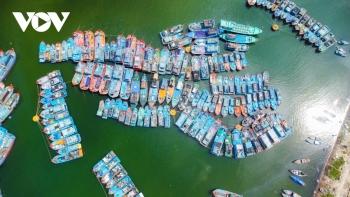 Tàu thuyền neo đậu ngay ngắn tránh bão số 9 tại âu thuyền Thọ Quang