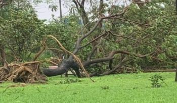 Gió rít liên hồi quật ngã hàng loạt cây xanh ở Đà Nẵng, Quảng Nam