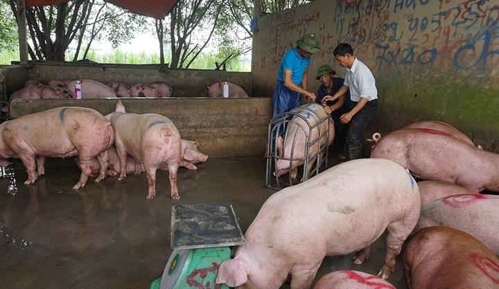 """Giá heo hơi lao xuống 30.000 đồng/kg, thịt ở chợ """"cố thủ"""", nhúc nhích giảm"""