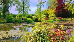 Theo cô gái Việt thăm vườn hoa của danh họa Monet