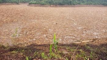 Gỗ, củi nổi ken đặc lòng hồ thủy điện Đăk Mi 4: Hạt Kiểm lâm Phước Sơn nói gì?