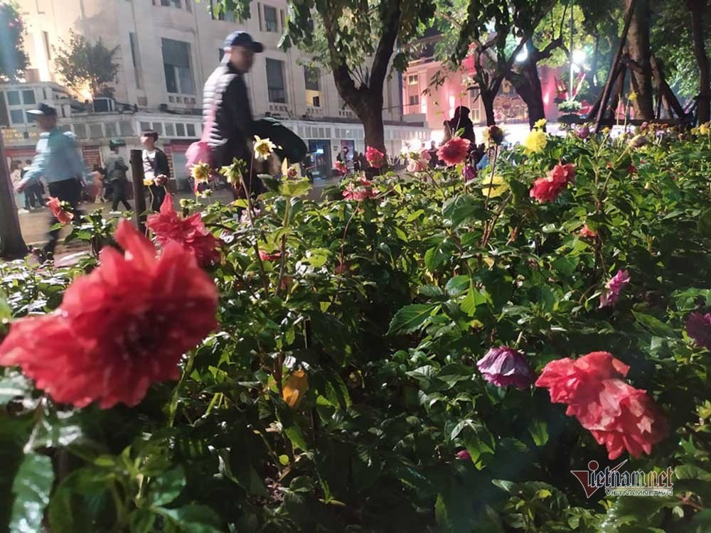 chuyen la ven ho guom tet nay vuon hoa ven nguyen sau dem giao thua