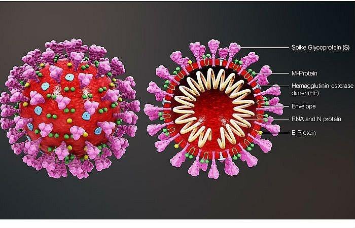 virus covid 19 xam nhap va lam nguoi nhiem tu vong theo co che nao