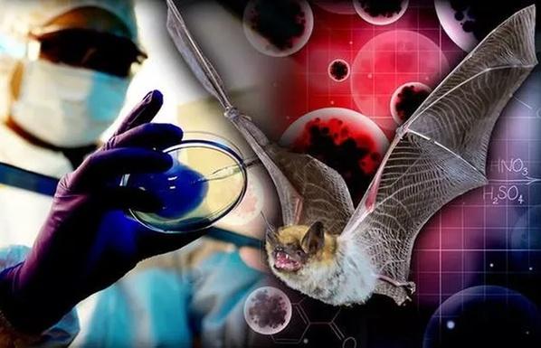 ai la nguoi dau tien bi lay nhiem virus corona