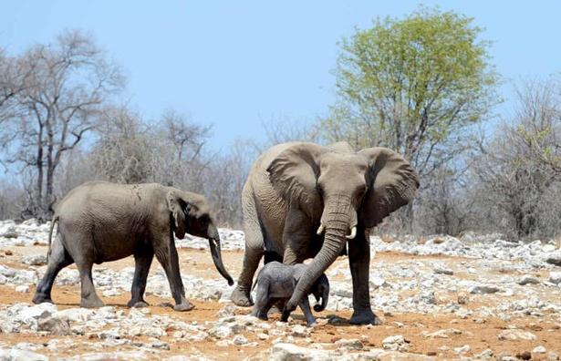 namibia dau gia 1000 dong vat hoang da vi ha n ha n nghiem tro ng