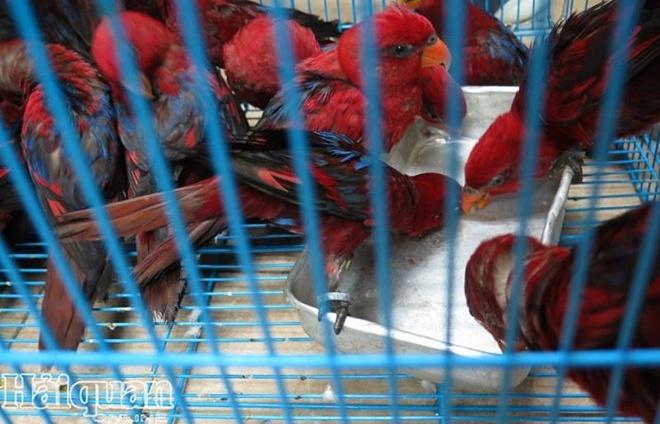 322 con vet quy bi bat giu tren chuyen bay cua vietnam airlines