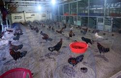 Cảnh sát vây ráp trường gà trong căn biệt thự ở Bình Dương