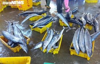 Ảnh: Cảng cá ở Quảng Ngãi đóng cửa, hàng trăm tấn hải sản ứ đọng
