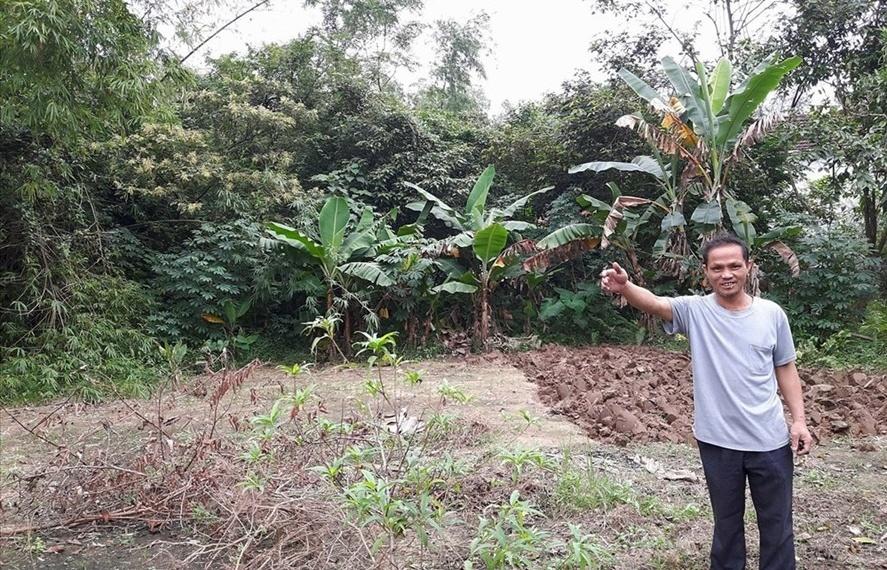 """Nghệ An: Ban giải phóng mặt bằng dự án """"vẽ"""" thêm 150 cây keo trên đất của dân?"""