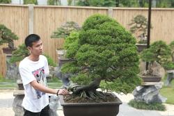 choang ngop vuon bonsai nhat tien ty giua dat bac giang