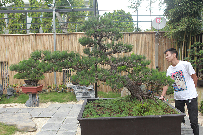 doanh nhan viet chi tien ty mua vua bonsai tu nhat ve ngam