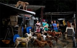 Dân Venezuela thả chó đi hoang vì không còn tiền nuôi