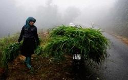 Không khí lạnh tiến sâu gây mưa nhiều nơi ở miền Bắc
