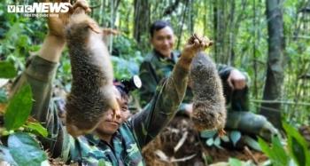 Xác minh nhóm thanh niên vào rừng quay clip săn bắt dúi tự nhiên