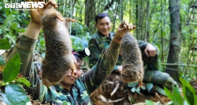 Xác minh nhóm thanh niên vào rừng quay clip săn bắt dúi tự nhiên - 1