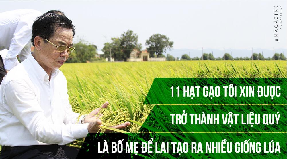 11 hat gao va gia tai chuc ngan ty cua con bao dong bang