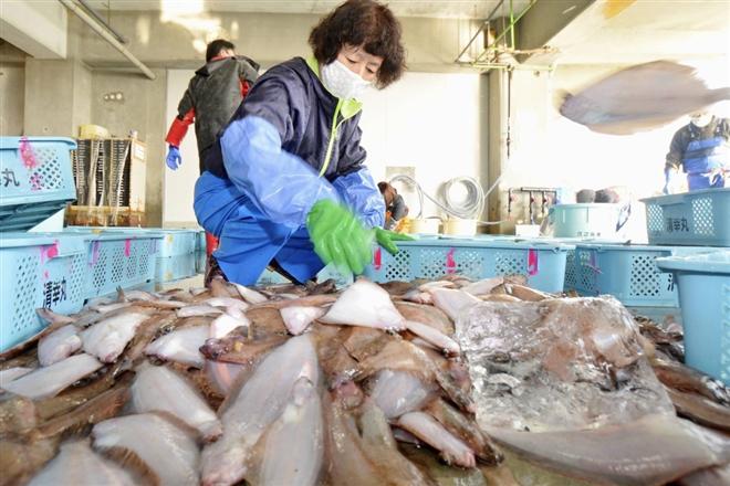 Một thập kỷ thảm họa hạt nhân Fukishima: Mối nguy chưa kết thúc - 4