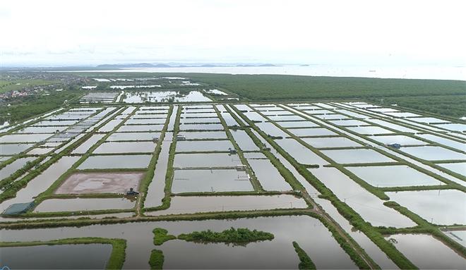 Hải Phòng thu hồi gần 400ha đất bãi bồi ven biển bị 'bỏ quên' cả thập niên - 2
