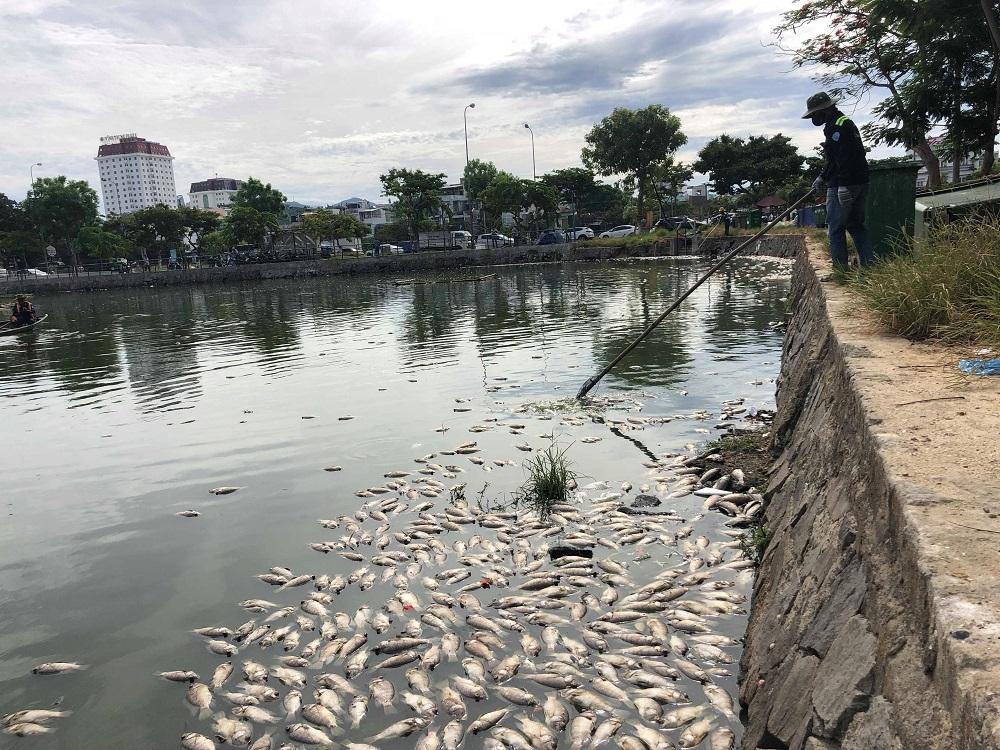 Cá chết ở hồ ông Dũng lò vôi định cải tạo là do thiếu oxy...