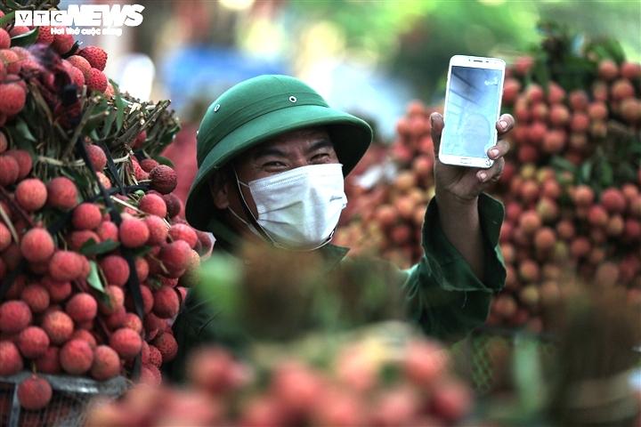 Ảnh: Ấn tượng hàng dài xe chở vải nối đuôi nhau đến điểm thu mua ở Bắc Giang - 11