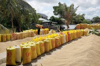Gạo Việt Nam bị cạnh tranh ở thị trường Philippines