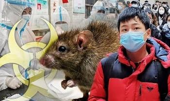 Trung Quốc liên tiếp cảnh báo các loại virus gây chết người