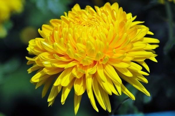 phong thuy bat ngo tu nhung loai hoa quen thuoc cam trong nha