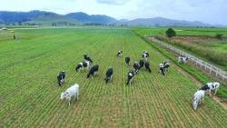Hàng Việt Nam và hàng sản xuất tại Việt Nam, tranh cãi vì quá rối