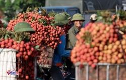 Việt - Trung, đôi dòng tỷ USD chưa bao giờ ngừng nghỉ