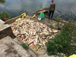 Khởi tố vụ án cá chết hàng loạt nghi do đầu độc bằng thuốc diệt cá