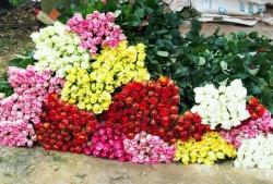 tra hoa hong nguyen bong 10 trieu dongkg ba chu con khong dam uong nhieu